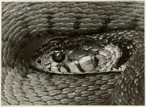 17_Kígyófej, 1927