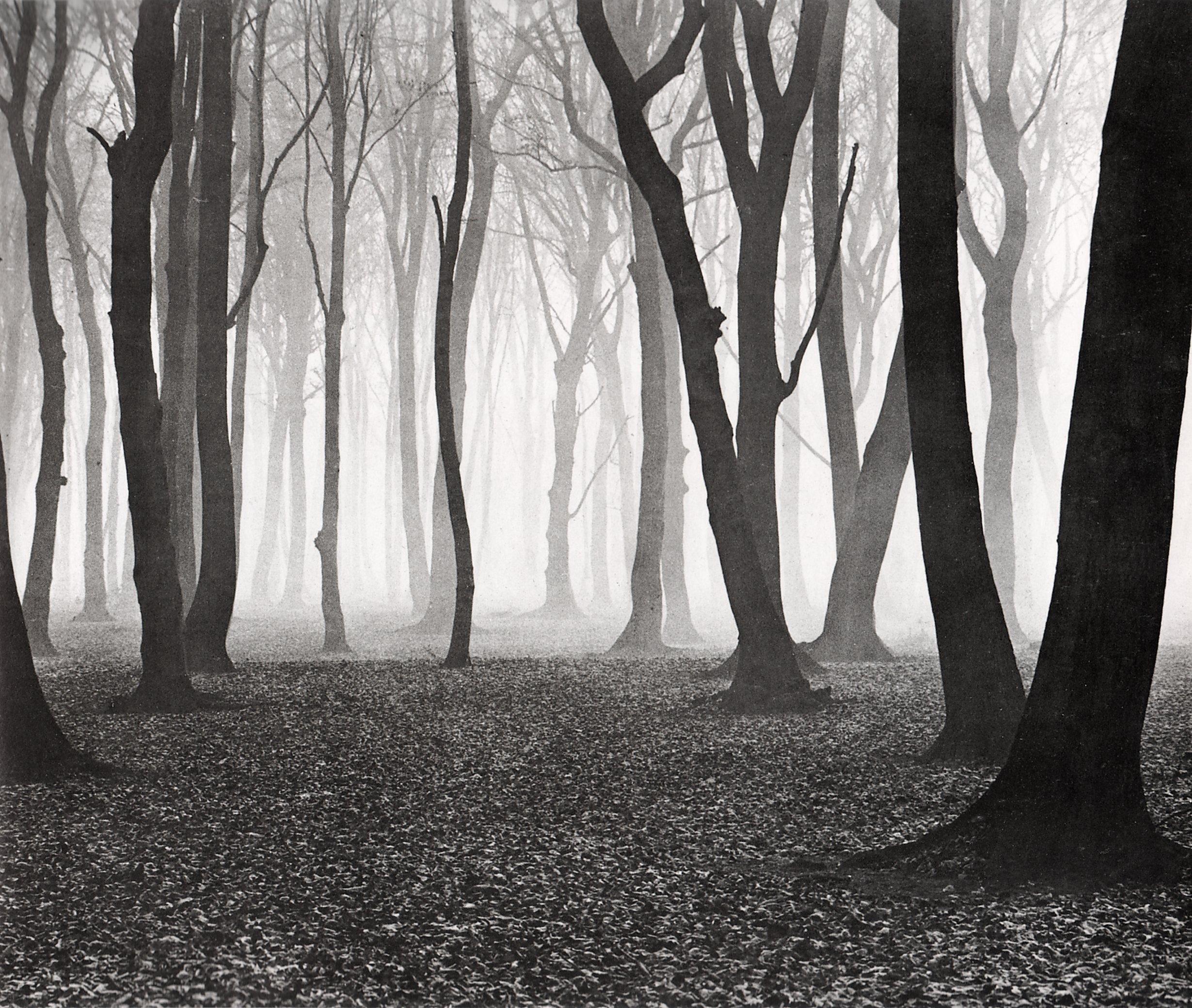 A fák igazságai - Albert Renger-Patzsch és Vajda Ernő