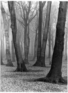 36_Bükkfaerdő, 1936