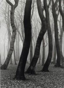 37_Bükkfaerdő ősszel, 1936